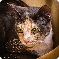 Adopt A Pet :: DIVA - Anna, IL