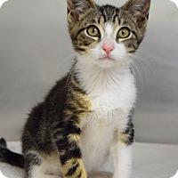 Adopt A Pet :: Melville - Dublin, CA