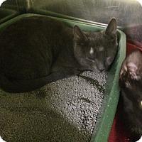 Adopt A Pet :: Jafar - Richboro, PA