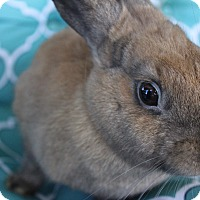Adopt A Pet :: Dusty - Hillside, NJ