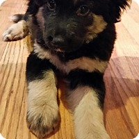 Adopt A Pet :: Libby - New Oxford, PA
