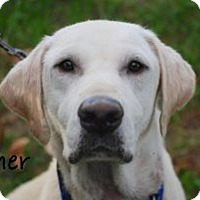 Adopt A Pet :: Asher - Minneola, FL