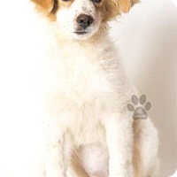 Adopt A Pet :: Almond - Las Vegas, NV