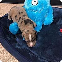 Adopt A Pet :: Aurora - Sayville, NY