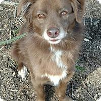 Adopt A Pet :: Lester - Capon Bridge, WV