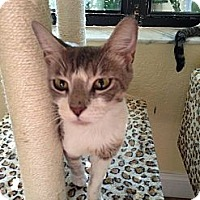Adopt A Pet :: Patches - Lauderhill, FL