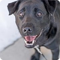 Adopt A Pet :: Stella Jean - Cheyenne, WY