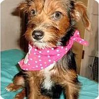 Adopt A Pet :: Vita - Mooy, AL