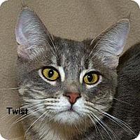 Adopt A Pet :: Twist N - Sacramento, CA