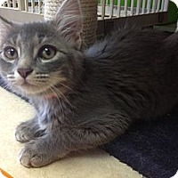 Adopt A Pet :: Fatima - Byron Center, MI