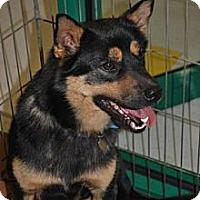 Adopt A Pet :: Rusty - Richmond, VA