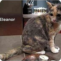 Adopt A Pet :: Eleanor - Portland, OR