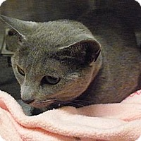 Adopt A Pet :: Sophie - El Cajon, CA