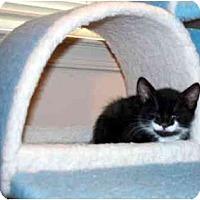 Adopt A Pet :: Columbia - Alexandria, VA