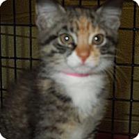 Adopt A Pet :: Kitty - Medina, OH