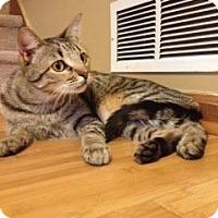 Adopt A Pet :: *Tugg - Winder, GA