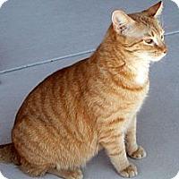 Adopt A Pet :: Raz - Tucson, AZ