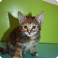 Adopt A Pet :: Lucy - Stilwell, OK