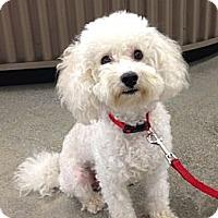 Adopt A Pet :: CHUBBY - Inglewood, CA