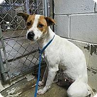 Adopt A Pet :: Bonita Wilder - Southampton, PA