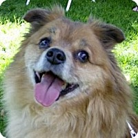 Adopt A Pet :: Tate - Toronto, ON