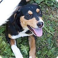 Adopt A Pet :: Grace - Braintree, MA