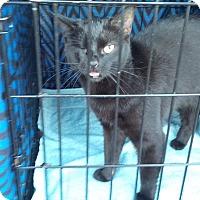Adopt A Pet :: Speedy - Seneca, SC