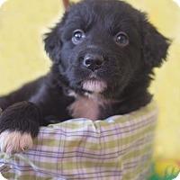 Adopt A Pet :: Tink - Millersville, MD