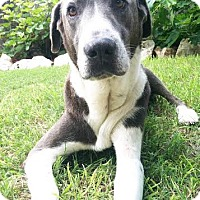 Adopt A Pet :: Maximus - San Antonio, TX
