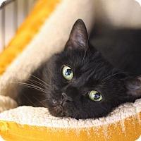 Adopt A Pet :: Oklahoma - Chicago, IL