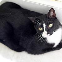 Adopt A Pet :: Petey - Dalton, GA
