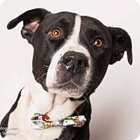 Adopt A Pet :: *FRED - Sacramento, CA