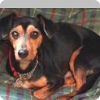 Adopt A Pet :: Pepper - Pittsboro, NC