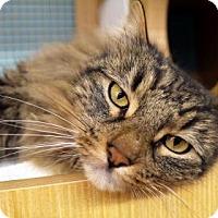 Adopt A Pet :: T.D. - Bellevue, WA