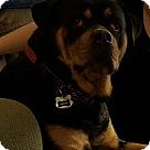 Adopt A Pet :: Miko