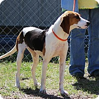 Adopt A Pet :: Xena-Adoption Pending - Pinehurst, NC