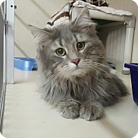 Adopt A Pet :: Merlin - Fort Collins, CO