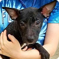 Adopt A Pet :: Reagan 4 - Aurora, CO