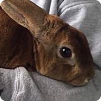 Adopt A Pet :: Ronny - Seattle c/o Kingston 98346/ Washington State, WA