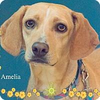 Adopt A Pet :: Amelia (Mellie)ADOPTION PENDING! - New Castle, DE