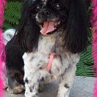 Adopt A Pet :: Oreo - Anaheim Hills, CA
