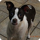 Adopt A Pet :: Coco(13 lb) AWESOME Girl!