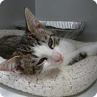 Adopt A Pet :: Julius - Massapequa, NY