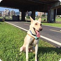 Adopt A Pet :: Arno - Sunnyvale, CA