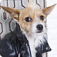Adopt A Pet :: Buster G. - Santa Fe, TX
