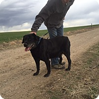 Adopt A Pet :: Kokomo - Evergreen, CO