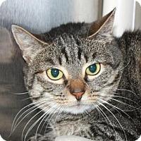 Adopt A Pet :: Miss Walrus - Salem, MA