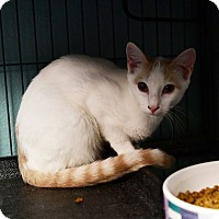 Adopt A Pet :: Glamour - Tomball, TX