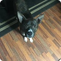 Adopt A Pet :: Ra - Washington, DC