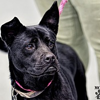 Adopt A Pet :: Lucy - Martinsville, IN